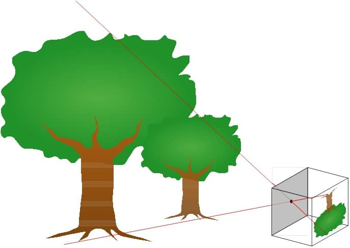 mono-cam image processing